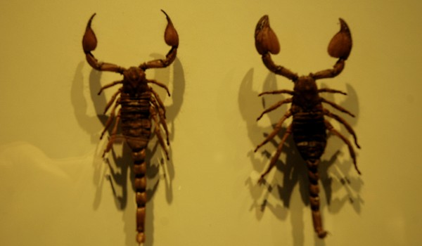 Eating Insects at Montreal Insectarium